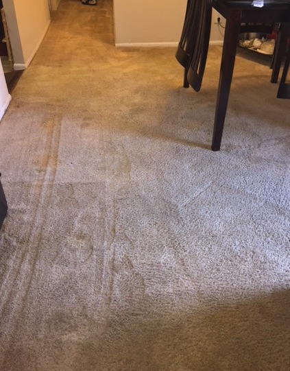carpet cleaning Lanham and Hyattsville, MD